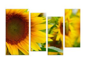 Желтые подсолнухи