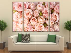 Нежные чайные розы