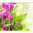 Изящная орхидея