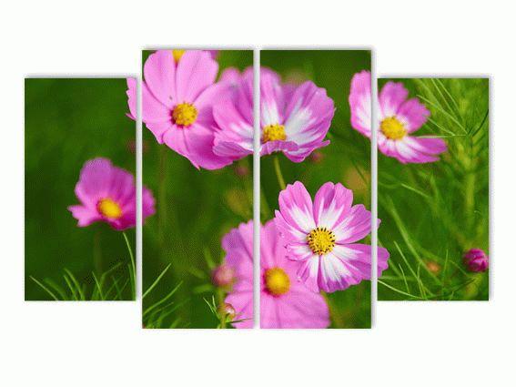 Космия розовая