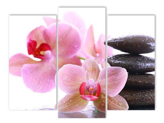 Орхидея у камня.