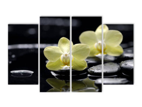 Орхидея в воде
