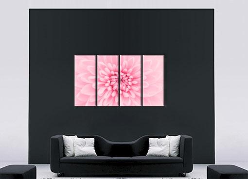 Розовая хризантема2