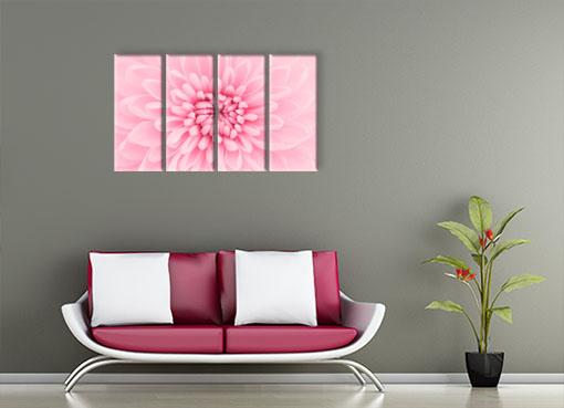 Розовая хризантема3