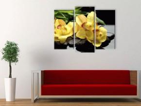 Желтая орхидея.