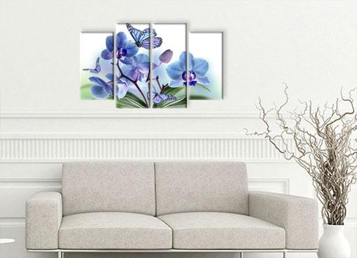 орхидея ибабочки 3
