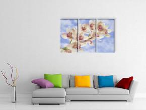 розовая орхидея 3