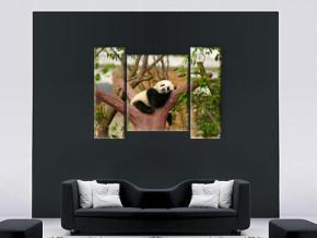 сонная панда 2