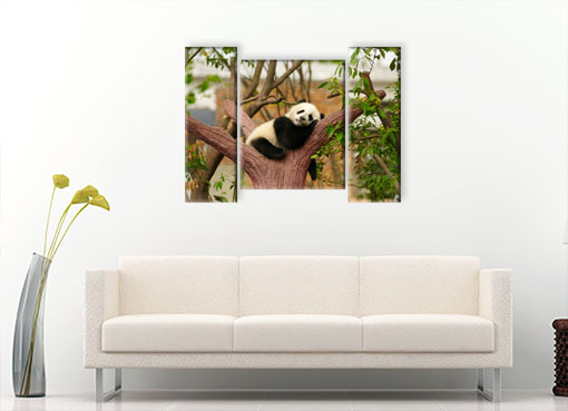 сонная панда 3