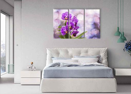 цветущая орхидея.