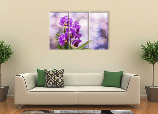цветущая орхидея2
