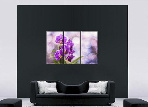 цветущая орхидея3