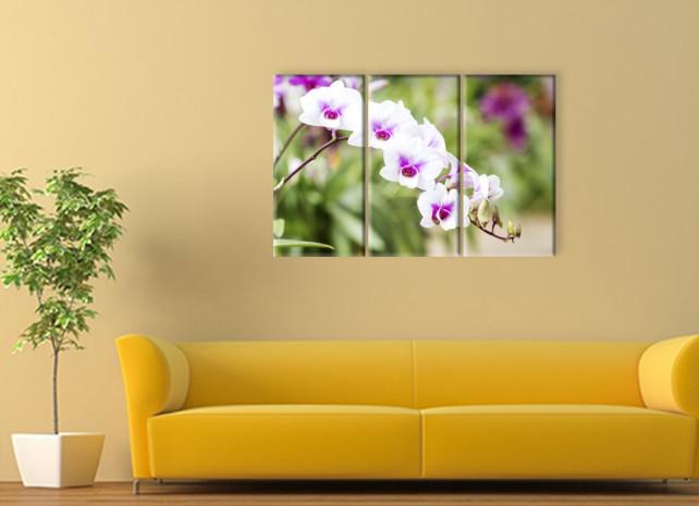 белые орхидеи3