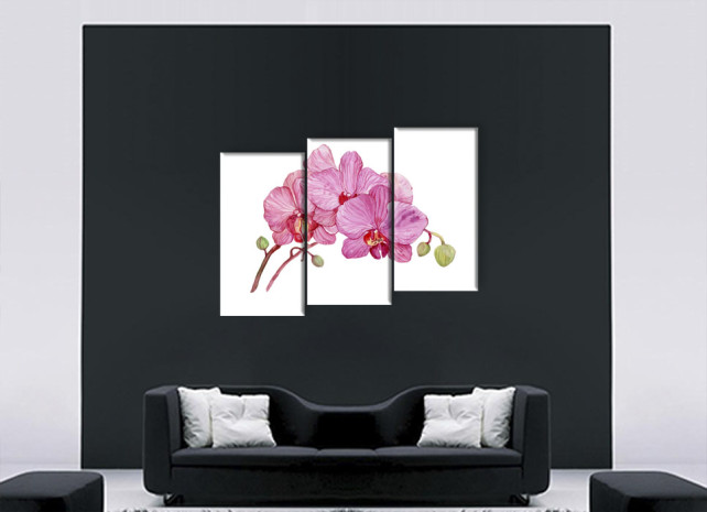 нарисованные орхидеи