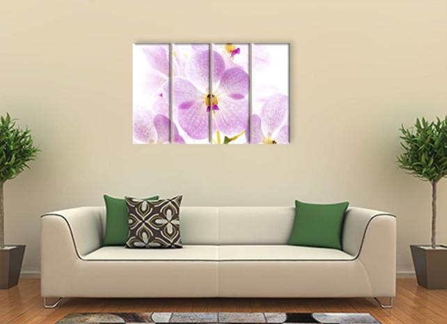 нежная орхидея3