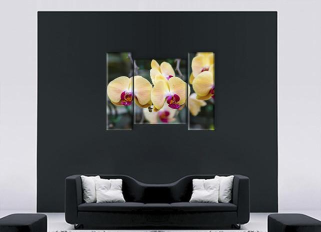 желтые орхидеи2