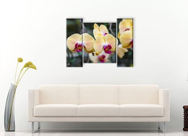 желтые орхидеи3