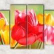 красочные тюльпаны с фоном
