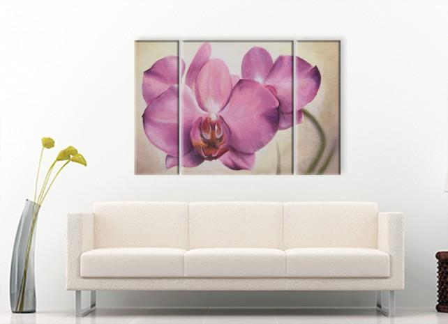розовая орхидея 1