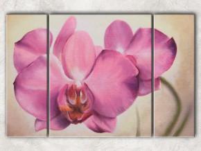 розовая орхидея с фоном
