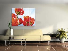 солнечные тюльпаны 1
