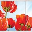 солнечные тюльпаны с фоном