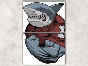 спортивная акула сф