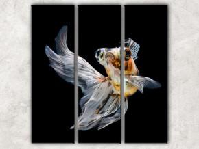 золотая рыбка 2 сф